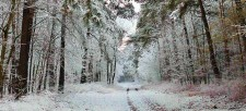 Take them to feel the forest: Winter sensory activities for kids