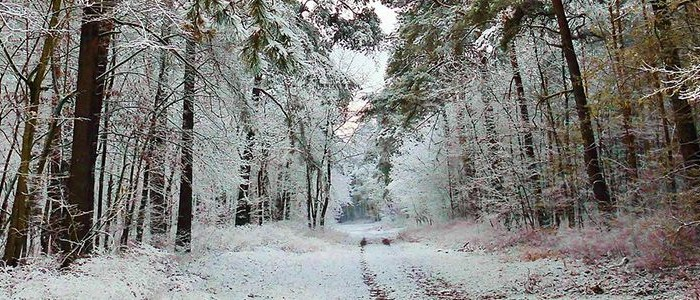 Image of a winter path in a forest