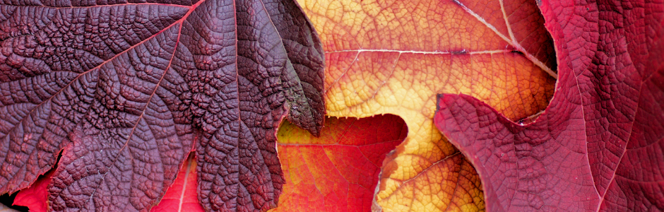Image of autumn leaves