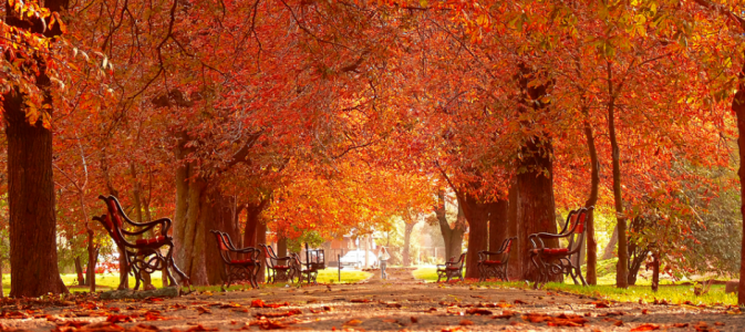 Image of a park in autumn