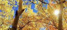 Connect with Nature: Take a Fall Hike