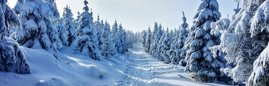 Image of a winter trail