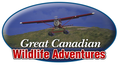 Picture of the Great Canadian Wildlife Adventures logo