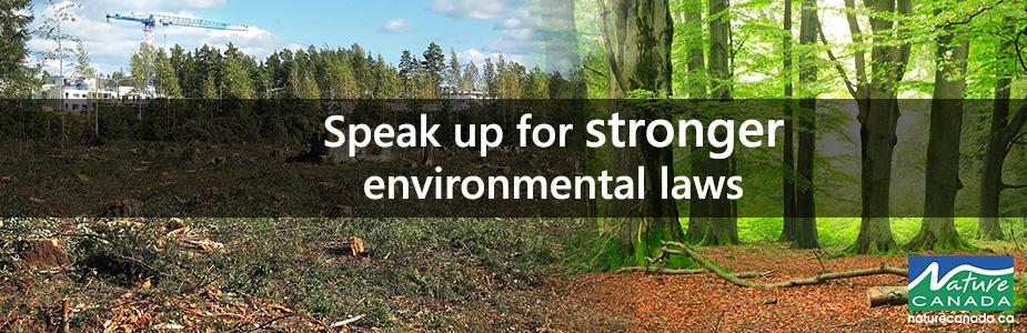 Image of Environmental Laws Header