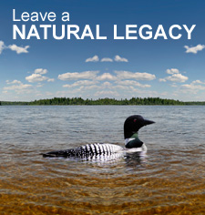 Legacy-loon