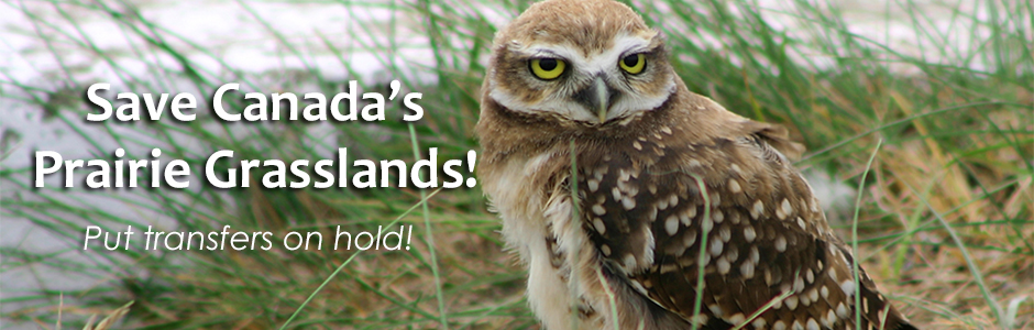 Owl Website Petition