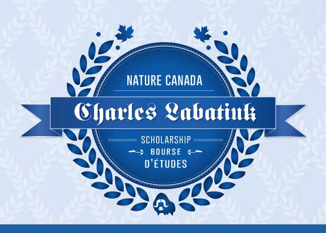 essay contests canada scholarships