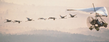 Whooping cranes follow an ultra-lite