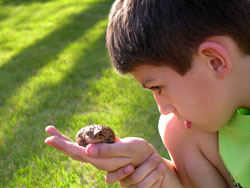 Young boy examing toad shutterstock