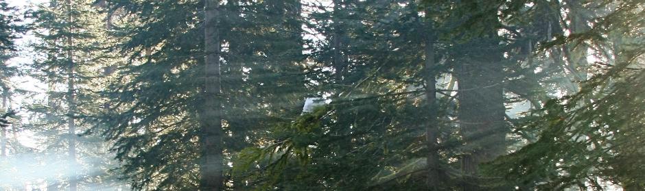 pine_trees_sun_dogs
