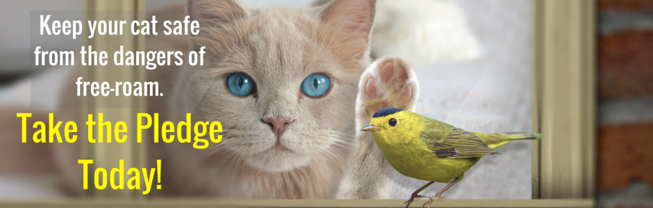 Image of Cats and Birds Pledge