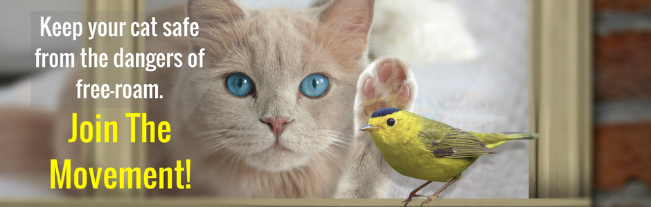 Image of Cat and Bird
