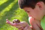 Image of a boy holding a frog