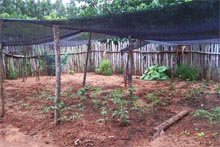 Paraguay organic family grraden