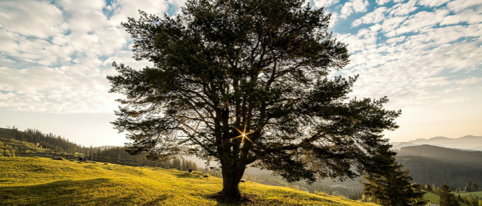 Image of a tree on a hill