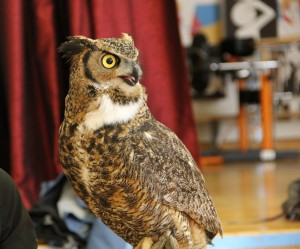 Darwin the Great Horned Owl Falcon-Ed, Connecting Kids to Nature at local Ottawa elementary schools, NatureHood, Nature Canada