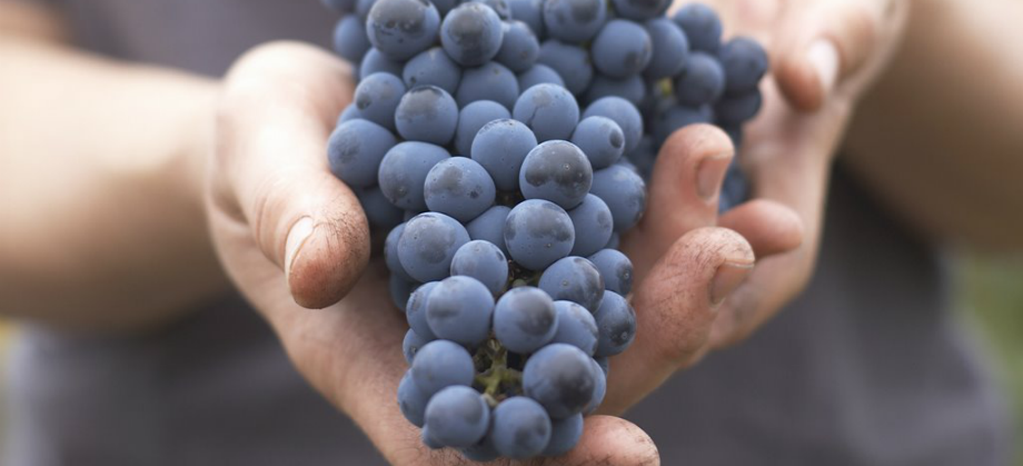 Image of grapes in hands