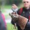 Venez à la Foire aux oiseaux à Ottawa!