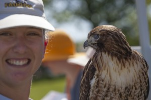 Falcon Ed free flight show at Nature Canada's Bird Day Fair May 21, 2014. Photography by Susanne Ure