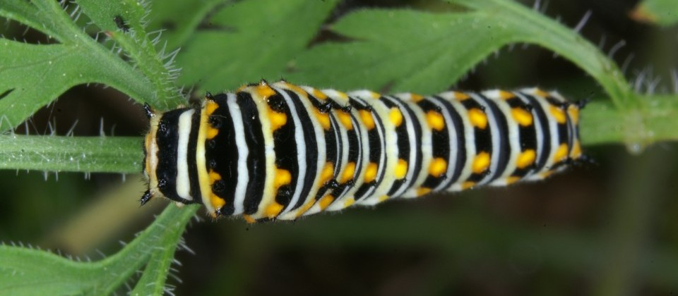 Caterpillar_Allan-Woodhouse-e1402318184454