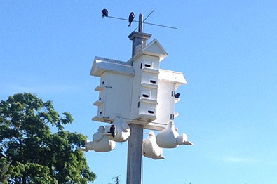 Image of a Purple Martin House