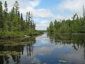Algonquin Park wetland showing black spruce and a typical Canadian Shield landscape, Ontario, Canada, protected area