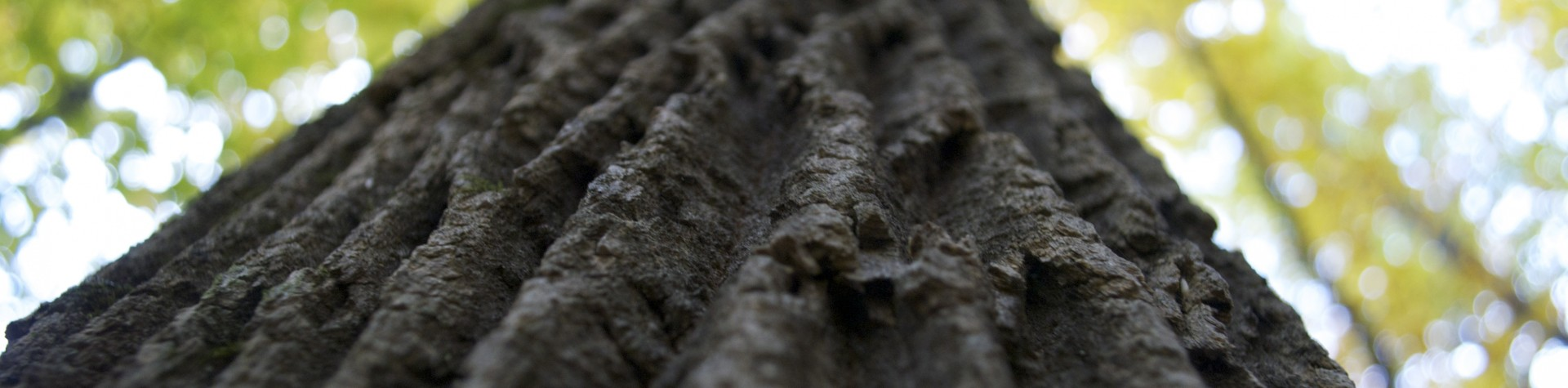 Tree-trunk-bobby-soosaar-1920x475