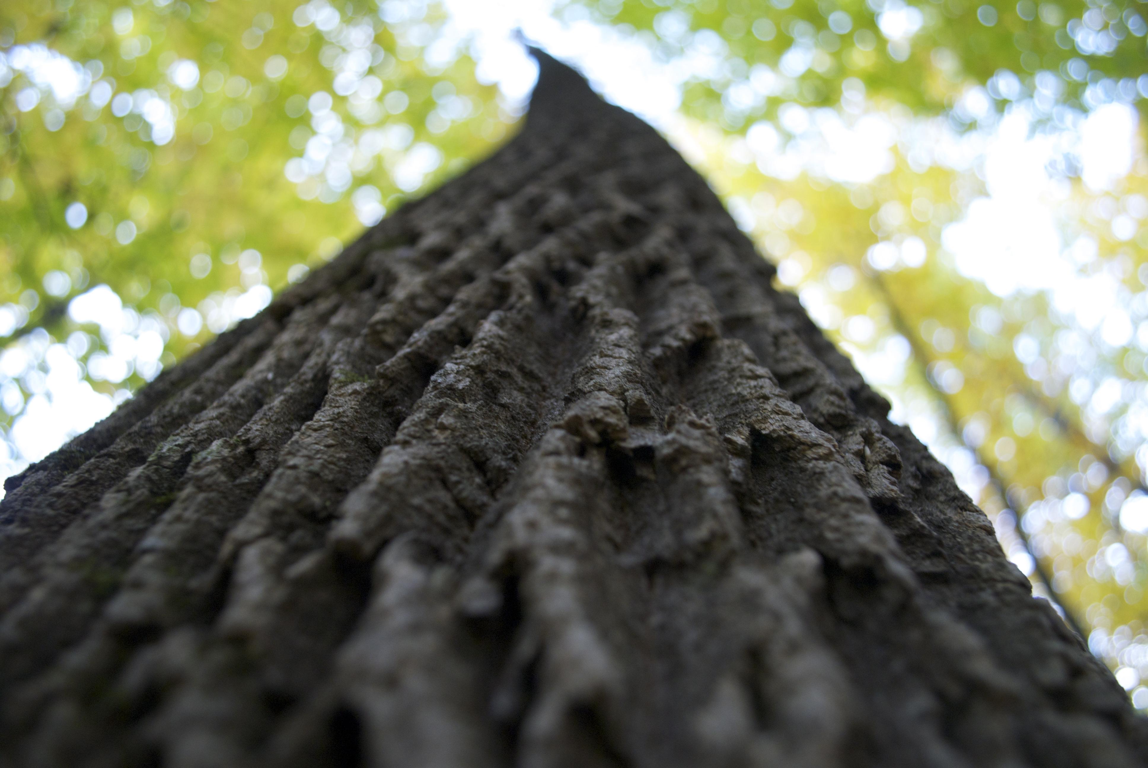 Tree-trunk-bobby-soosaar