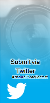 "Picture of ""Submit via Twitter"
