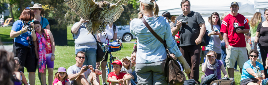 Image of owl flying