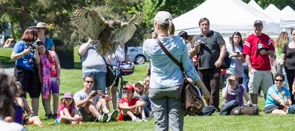image of a bird of prey demonstration