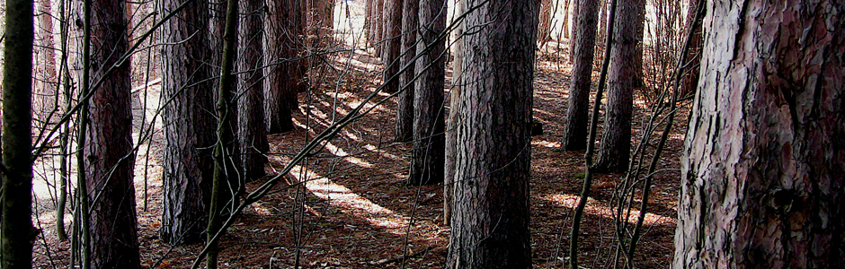 image of a stand of trees