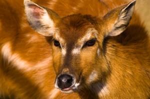 baby deer_enewsjuly07