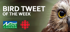 Bird Tweet of the Week: Canada Goose