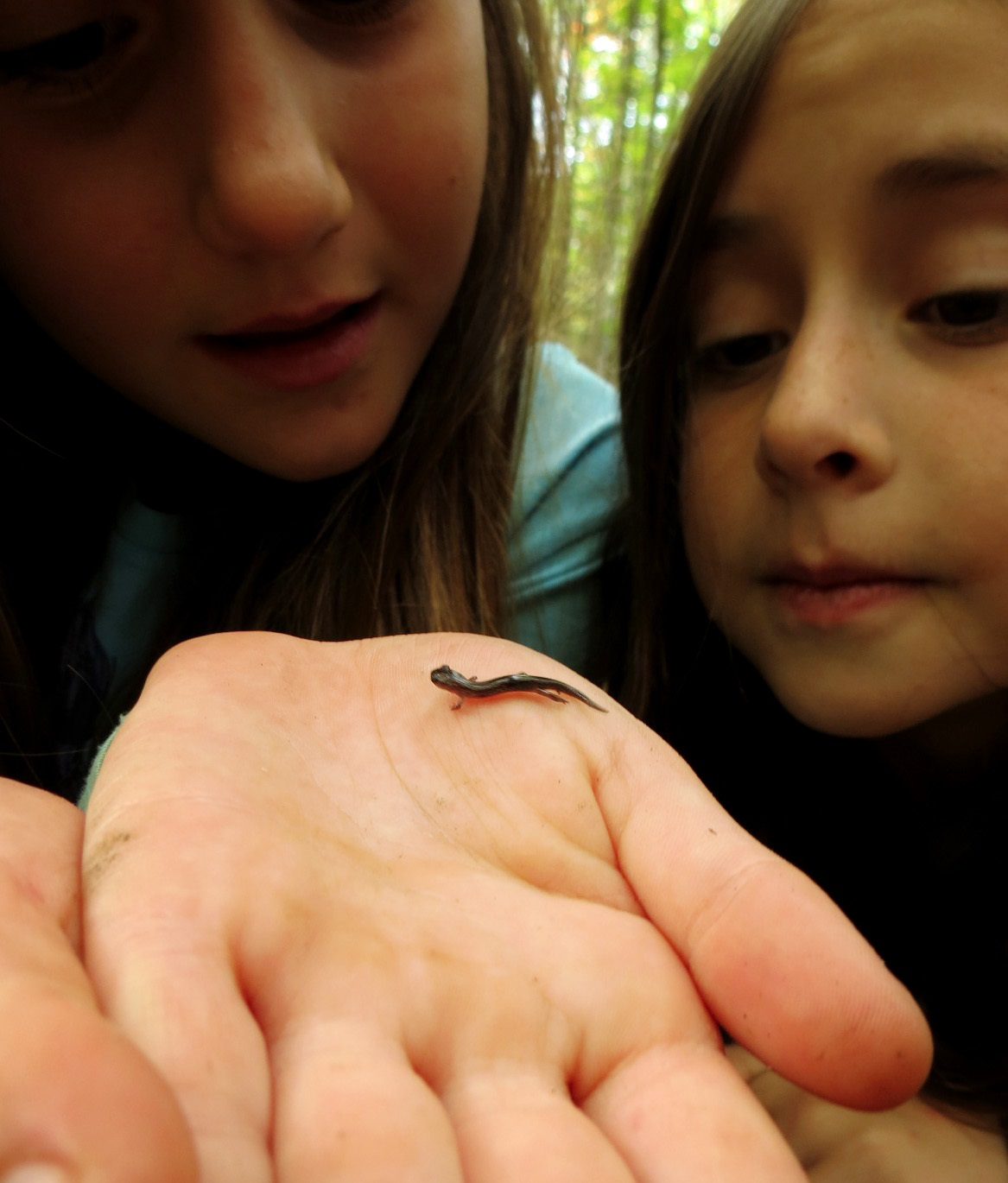 Kaitlyn and Emily holding a salamander