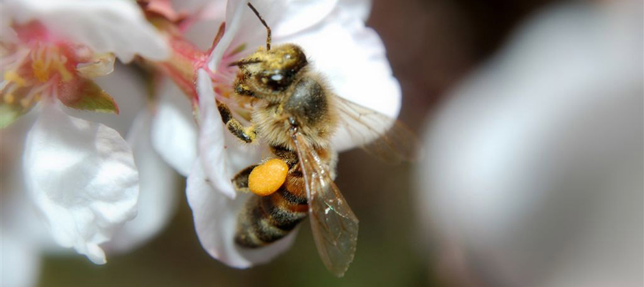 Ontarians want bee-killing insecticide banned