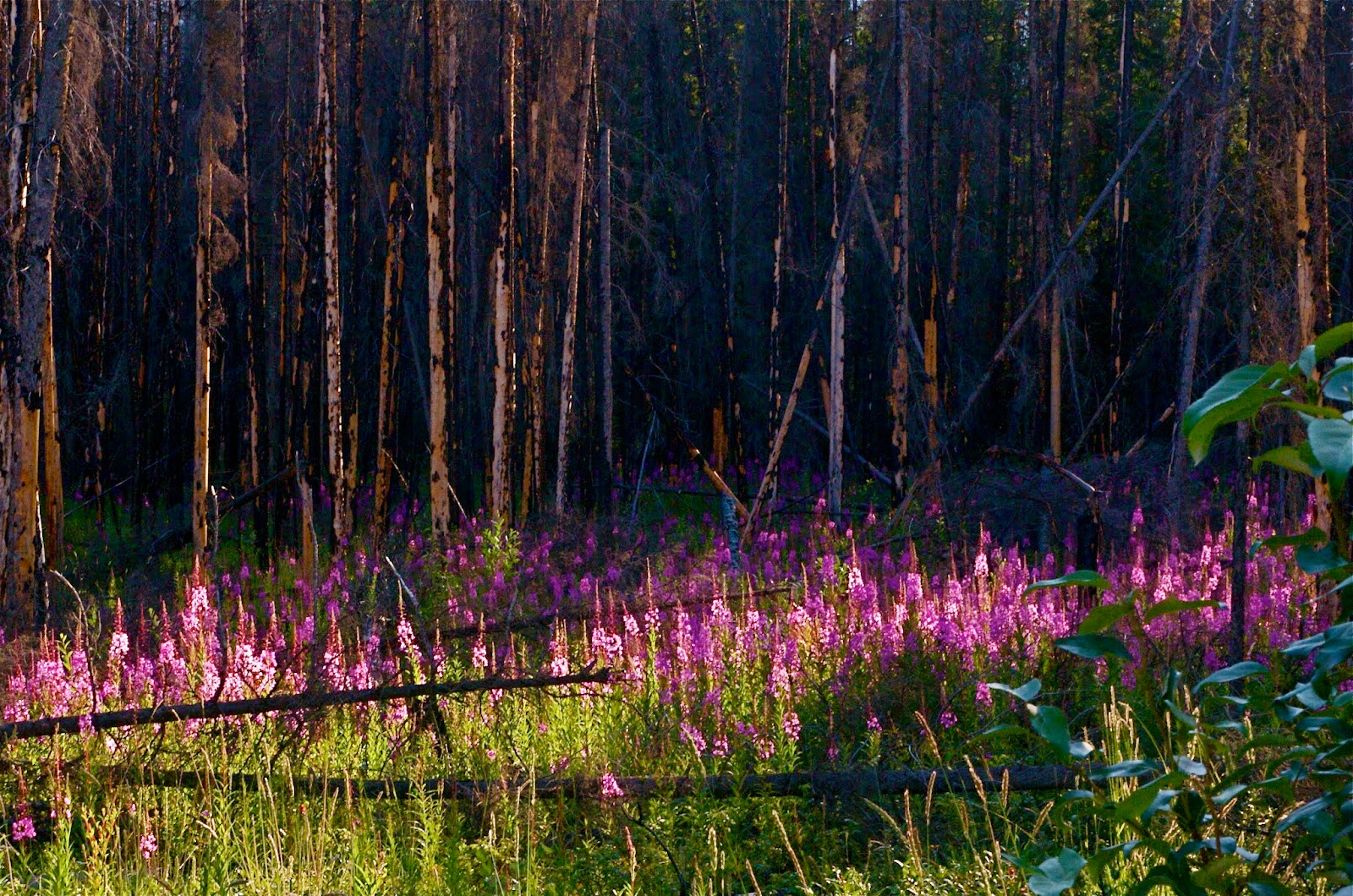 Forest and flowers