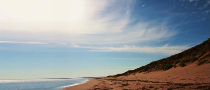 image of a summer beach