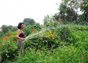 watering community garden