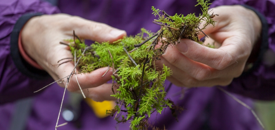 photo of examining moss