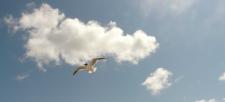 Climate change impacting birds – Interview on Banff Centre Radio