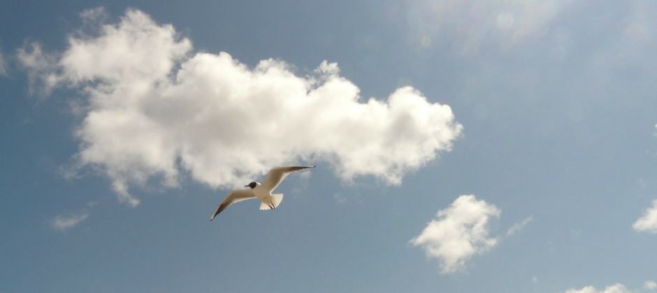 Image of a bird flying