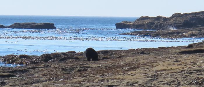 Image of a bear on a beach