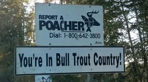 bull trout poacher sign by Cory Willard