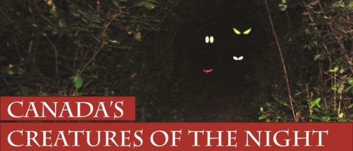 dark path image