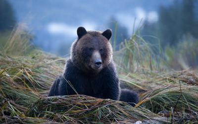 Bear - 400x250