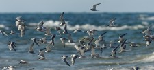 Birds and Climate: The Audubon Birds and Climate Report Explained