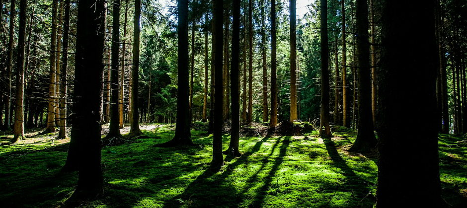 Image of a forest