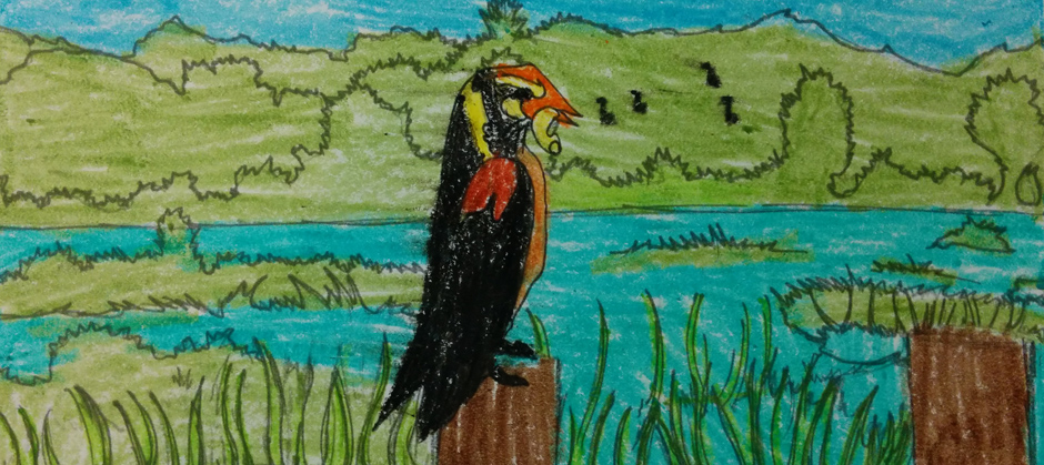 childs drawing of a bobolink
