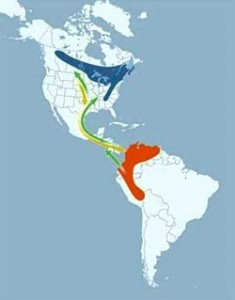 Range of Canada Warbler showing breeding, migration and wintering areas